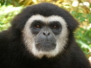 Up close with a monkey, Phuket Thailand