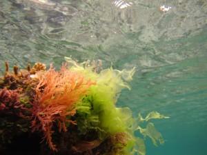 Life under the surface at Serangan Island