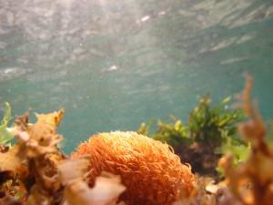 Below the surface at Serangan Island