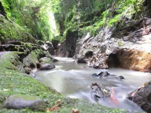 Creek running through the Monkey Forest