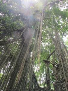 The Monkey Forest, Ubud