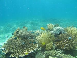 Reef at Gili Trawangan