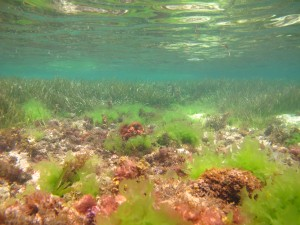 Reef and sea grasses at Serangan Island
