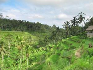 Rice terraces at Tegallantang, Ubud