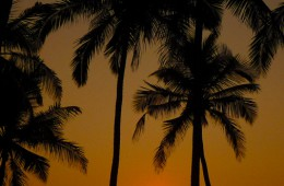 Kerala: A Journey Into Gods Country
